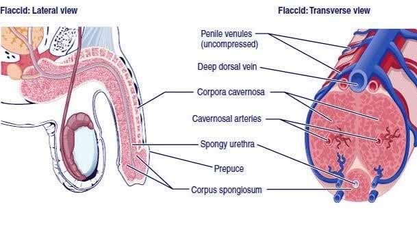 ما هو علاج التسرب الوريدي ؟